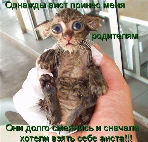 Котёнок дня (для поднятия настроения)